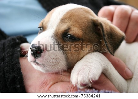 Cute very young puppy
