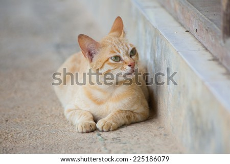 Cute white and orange hair cat laying on the floor.