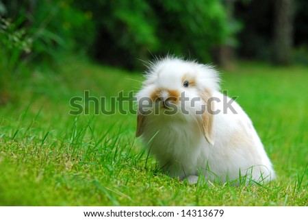 Cute White Baby Rabbits Cute White Baby Lop Ear Rabbit