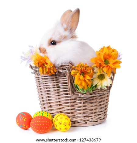 Cute white bunny sitting  in a basket with flowers and colorful easter eggs, isolated on white - stock photo
