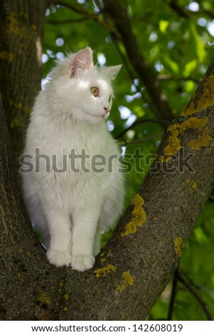 Cute white cat on the tree