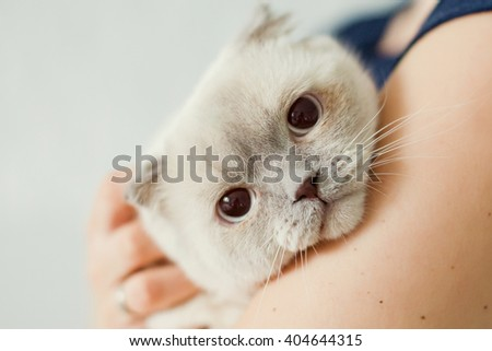 cute white cat with brown ears