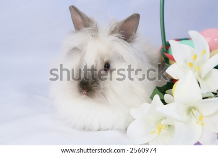 Cute white fluffy bunny with Easter lilly