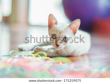 Cute white kitten playing with colourful threads. - stock photo
