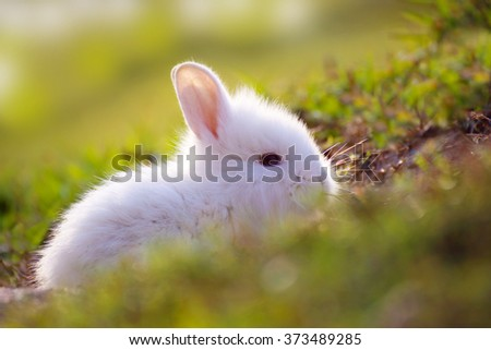 Cute white Little Rabbit peeking out of hole. - stock photo