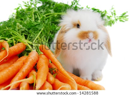Cute white lop ear baby rabbit and carrots isolated on white - stock photo
