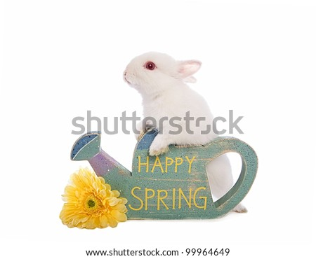 Cute white Netherland Dwarf bunny rabbit with sign that say's Happy Spring isolated on white - stock photo