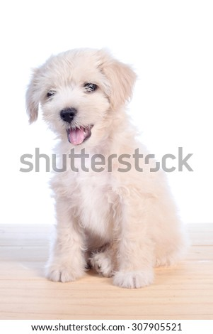 Cute white puppy - stock photo