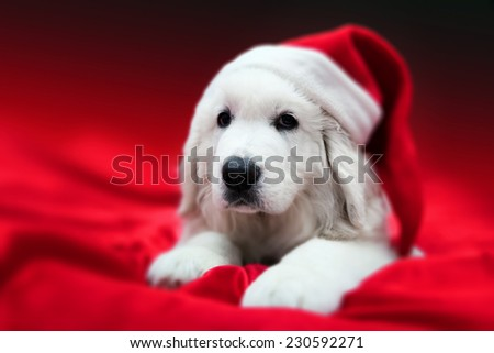 Cute white puppy dog in Chrstimas hat lying in red satin. Holiday theme, greeting card. - stock photo