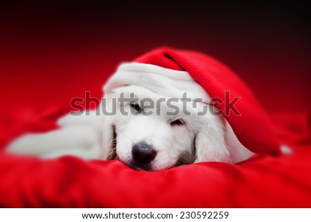 Cute white puppy dog in Chrstimas hat sleeping in red satin. Holiday theme, greeting card. - stock photo