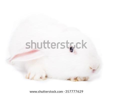 Cute white rabbit - stock photo