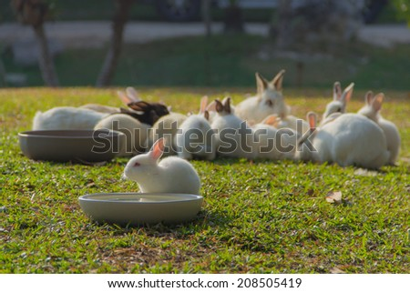Cute White rabbit with morning light in the garden - stock photo