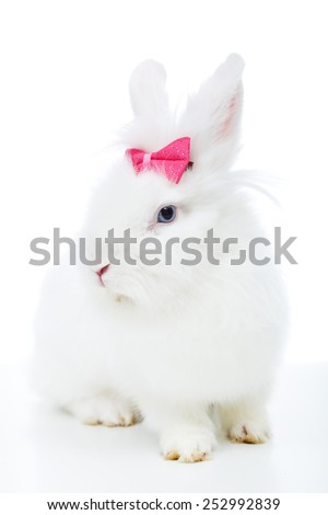 Cute white rabbit with pink bow sitting - isolated - stock photo