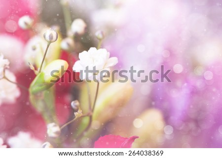 cute white small flowers - stock photo