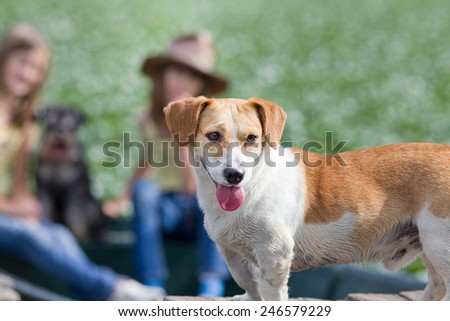 Cute yellow and white dog standing in front plan and two girls with another dog sitting in background - stock photo