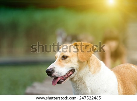 Cute yellow and white dog standing next to river - stock photo