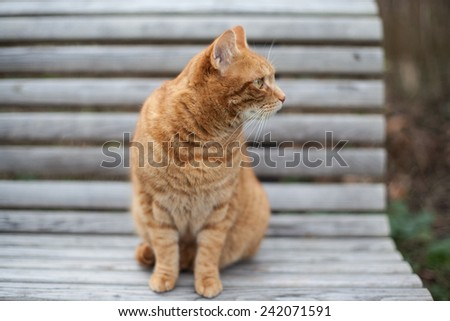 Cute yellow cat sitting on the chair staring attentively on the side - stock photo