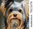 Cute Yorkshire Terrier Puppy - stock