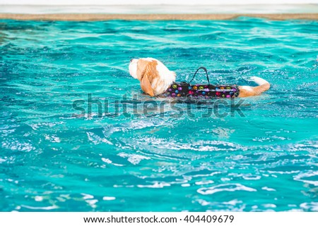 Cute young beagle dog playing toy in the swimming pool