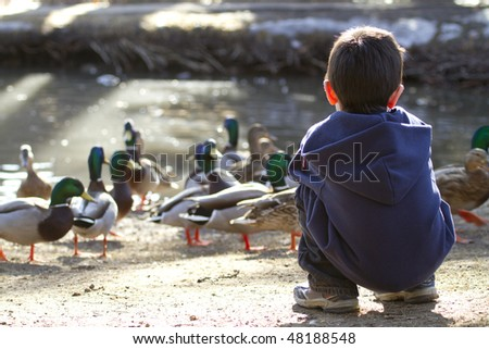 Cute young boy feeding the ducks late in the afternoon - stock photo
