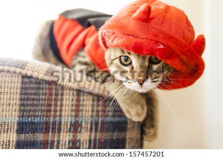 Cute Young Cat - stock photo