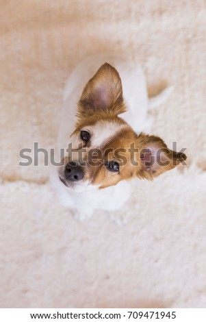 Cute Young Dog Over White Background Stock Photo - Dogs looking funny with toys