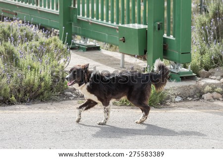 Cute young dog walking on road - stock photo