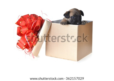 Cute young puppy in gift box