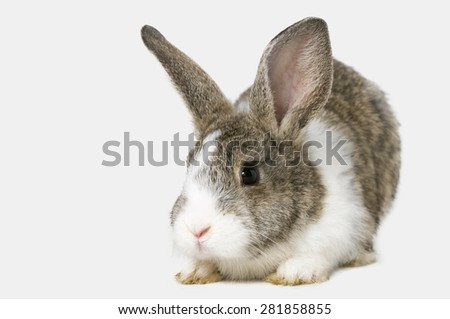 cute young rabbit on white