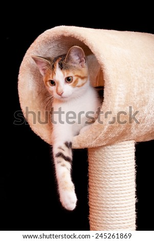 Cute young tabby cat laying on scratching post against black background