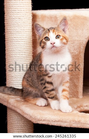 Cute young tabby cat sitting on scratching post against black ba - stock photo