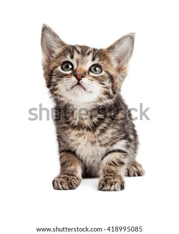 Cute young tabby kitten isolated on white