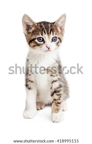 Cute young tabby kitten sitting on white
