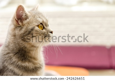 Cute young tabby shorthair on colorful background - stock photo