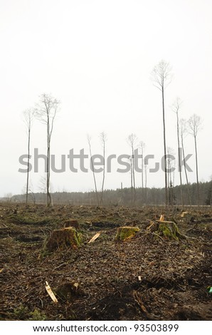 Cuted forest - stock photo