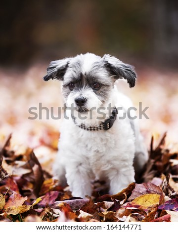 Cutest dog on the planet - stock photo