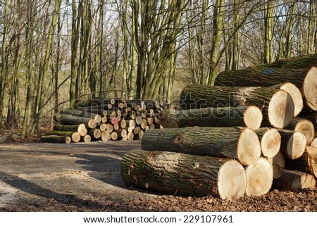 Cutted lumber by a forest - stock photo