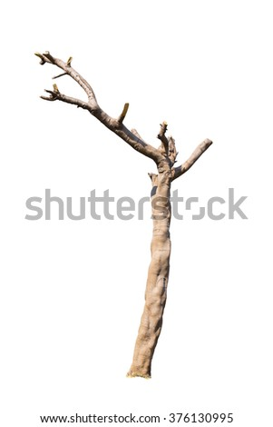 Cutted tree on white background
