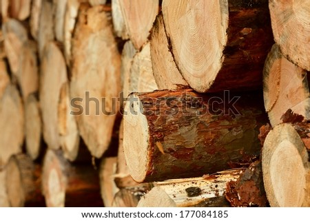 cutted tree stumps texture