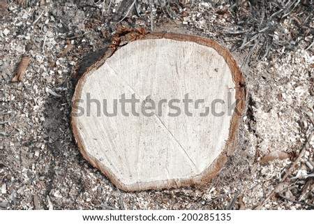 cutted trunk from the top - stock photo