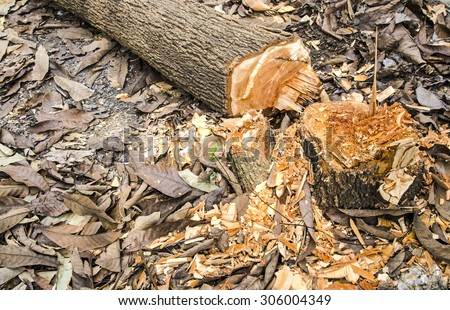 Cutting down a tree by axe  - stock photo