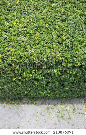 Cutting small green plant - stock photo