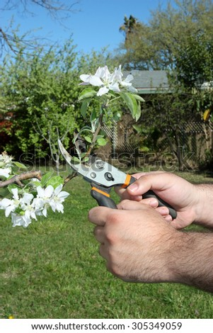 Cutting tree branch during spring