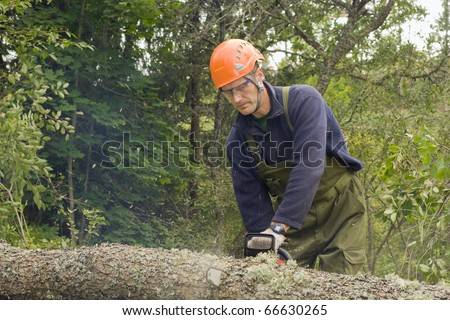 Cutting up a fallen tree with a chainsaw - stock photo