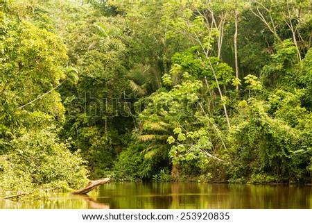 Cuyabeno River National Park , typical jungle vegatation - stock photo