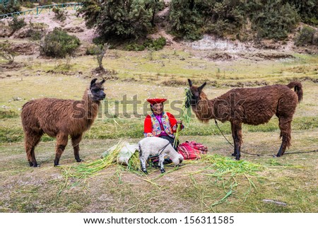 Cuzco, Peru - July 13, 2013: woman feeding alpacas and sheep near Tambomachay Incas ruins in Cuzco Peru on july 13th, 2013. Tambomachay is an archaeological site associated with the Inca Empire. - stock photo