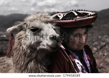 CUZCO, PERU, SOUTH AMERICA - APRIL 2013 - Picture is focused on decorated Alpaca which is very common animal in whole Peru. The place is situated above the Cuzco city near Sacsayhuaman. - stock photo