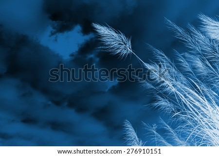 Cyanotype of x-ray grass