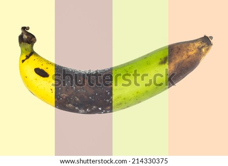 Cycle of fresh banana to rotten banana fruit ,mix picture - stock photo