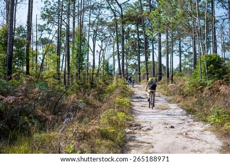 Cyclists rides on a gravel road in the middle of a pine forest. - stock photo